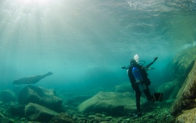 TTN Las Vegas Brings You Diving At Cabo Pulmo
