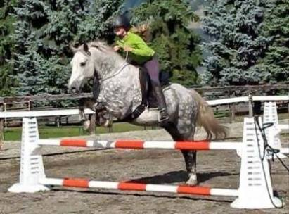 A dapple grey horse jumps with a Liberty Lariat neck ring