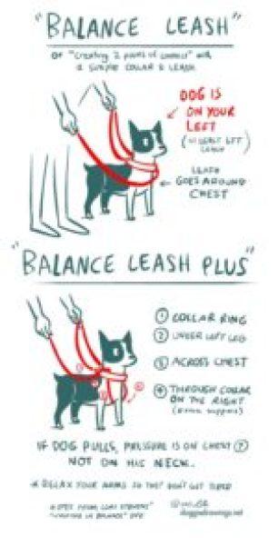 Tellington TTouch Balance Leash as drawn by Lili Chin