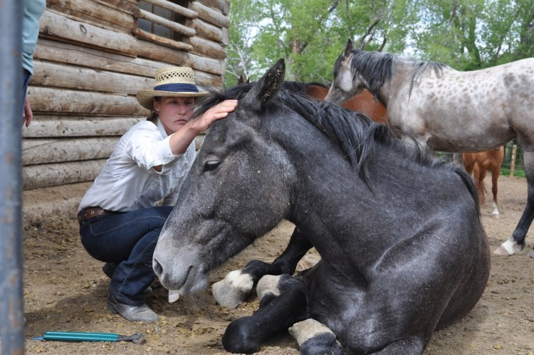 TTOuch helps build trust with horses