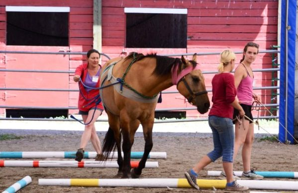 Ground driving a horse at the Starting Young Horse Clinic with Tellington TTouch
