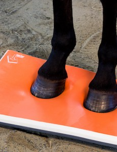 Surefoot equine Physio full pad