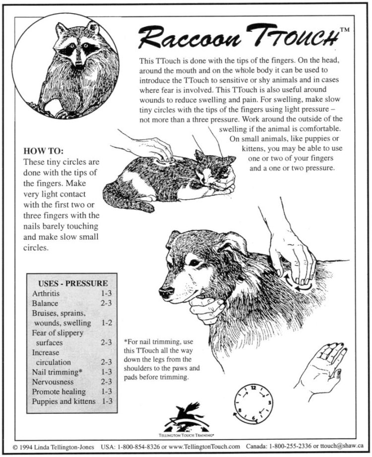 Raccoon TTouch for Dogs