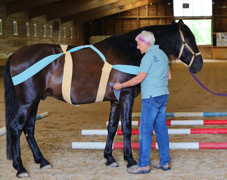 TTouch Body Wrap for horses
