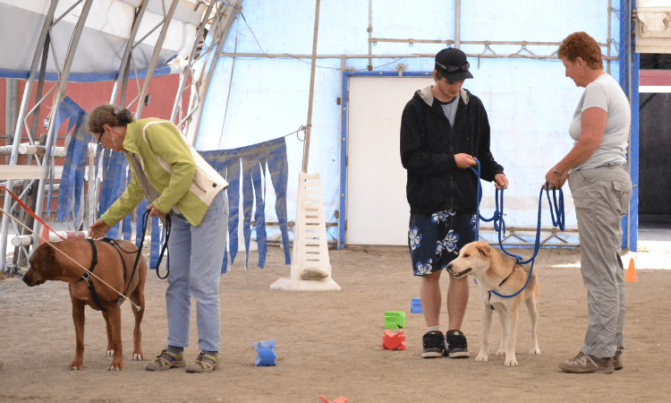 Using the TTouch Confidence Course to help dogs