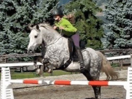 A horse jumps with no bridle