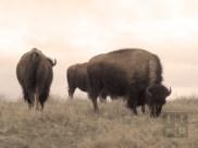 Brian's Buffalo