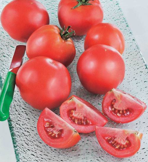 Tomato New Girl - Qty. 250sds