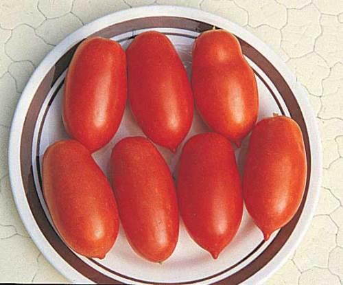 Tomato Mamma Mia - Qty. pot