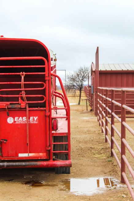 Rain or shine, the work must be done. Here, a trailer is being preped to transfer horses to and from sites during the work day.