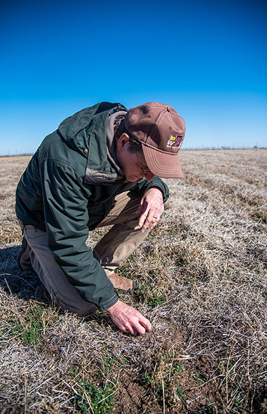 Photo of Dr. West checking the alfalfa