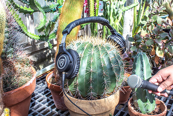 Photo of a cactus with headphones