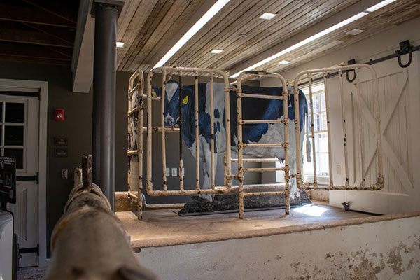 Picture of a dairy cow representation in the renovated Dairy Barn