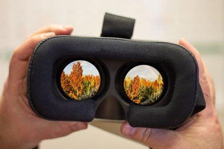 Sorghum fields are shown through virtual reality