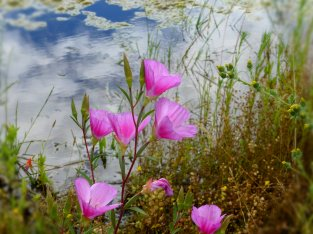 flowers by pond