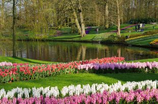 [自助旅行] 荷蘭旅遊之庫肯霍夫花園鬱金香