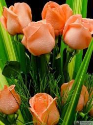 35-Rose_557218_3171076334982