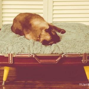 TUBE Magazine_Sarah Elliott_DYI pet bed_14