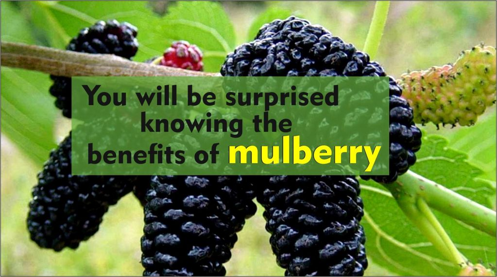 You will be surprised knowing the benefits of mulberry-tubertip.com