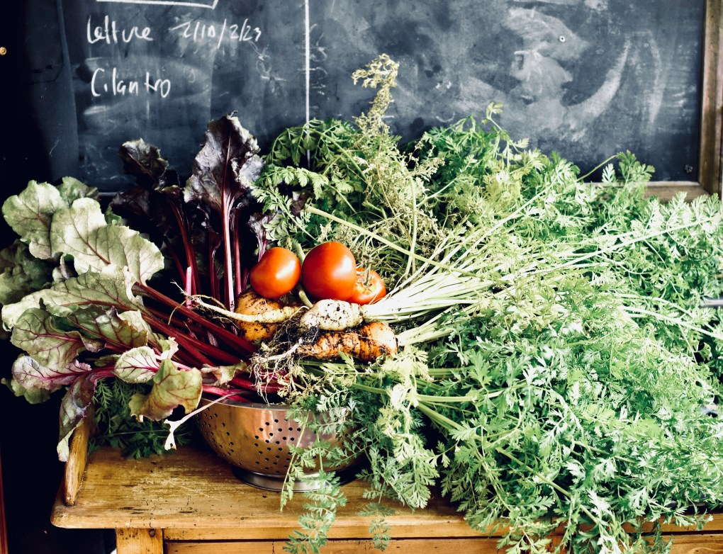 A still life of vegetables gathered from the garden including tomatoes, beets and parsnips.