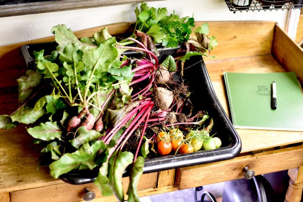 Typical vegetable harvest, grown in an indoor garden