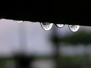 saome-rain-drops-in-the-morning_w725_h544