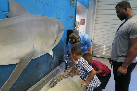 SeaWorld Orlando 2016