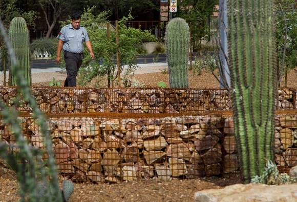To reduce water usage, an underground irrigation system, instead of sprinklers, hydrates a cactus garden at the County Public Service Center in Tucson.