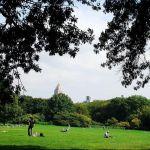 Ornamento no Central Park