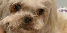 Angélica lamenta morte de cachorro de estimação: 'você lutou'