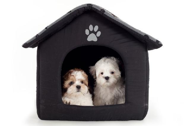 casinha para seu cãozinho