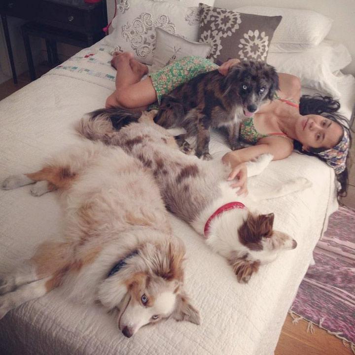 TN113_dogs_divorce_720a