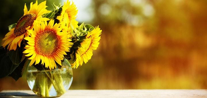 tuenight diane di costanzo bloom sunflower
