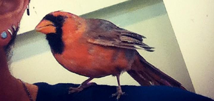 tuenight green wild bird fund animals lauren oster tuenight