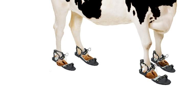 TueNight Shoes Vegan Lauren Oster