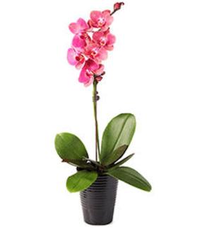 tuenight office orchids
