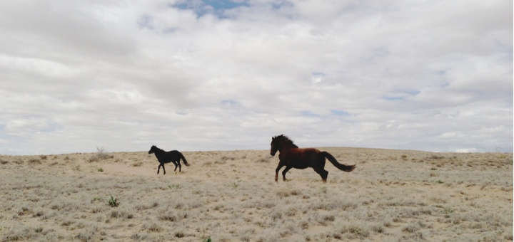 Horses run free in Mexico