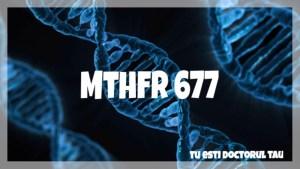MTHFR 677