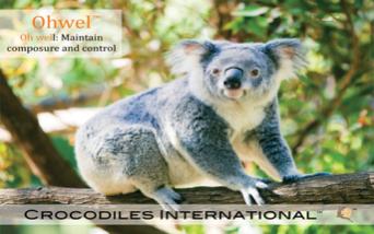 Relieving Stress the Koala Bear Way