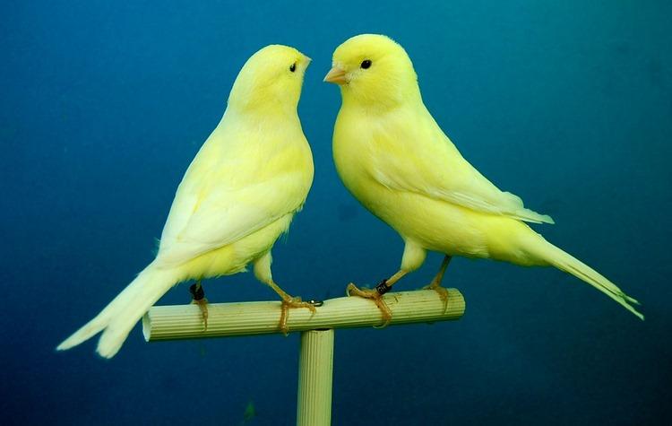 Cómo desparasitar a las aves - Parásitos internos y externos