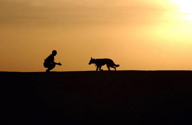Consejos para evitar contagios por coronavirus al sacar a pasear al perro