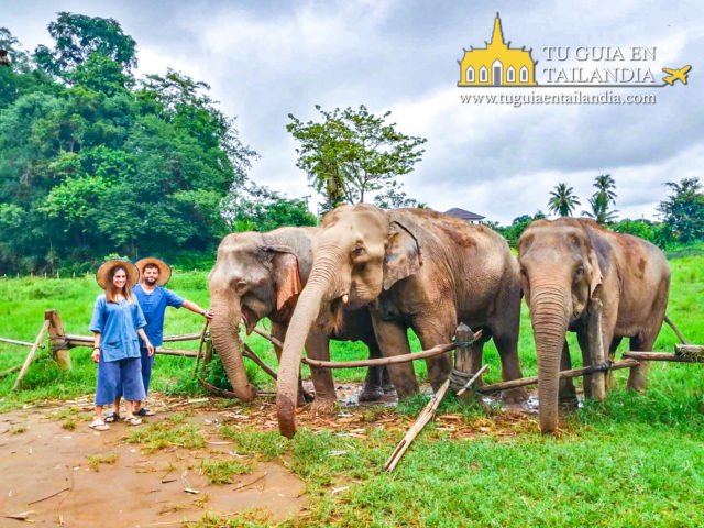 campamento de elefantres en chiang mai