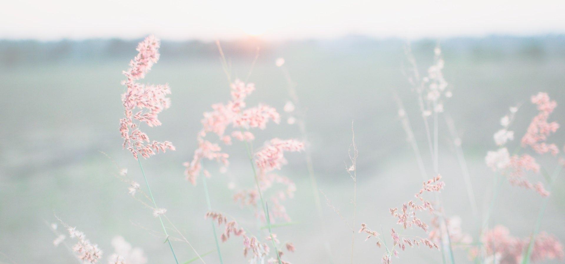 Flores-delicadas-tranquilidad