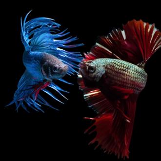 Beleef het onderwaterleven