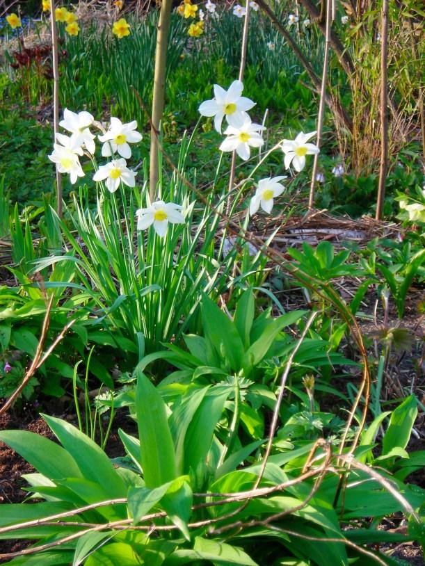 DSCN2641 tuin lente 2011