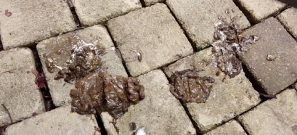 Poep op ons dak... een mysterie..._html_m40f6339c