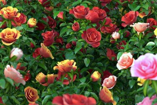 Tien soorte plante wat elke tuin behoort te hê