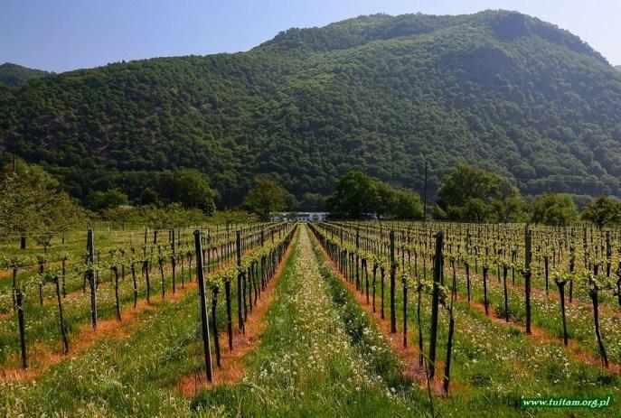 WACHAU - naddunajska dolina wina