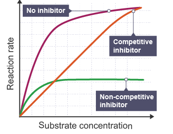 Enzyme Inhibition and Reaction Rate of Enzyme