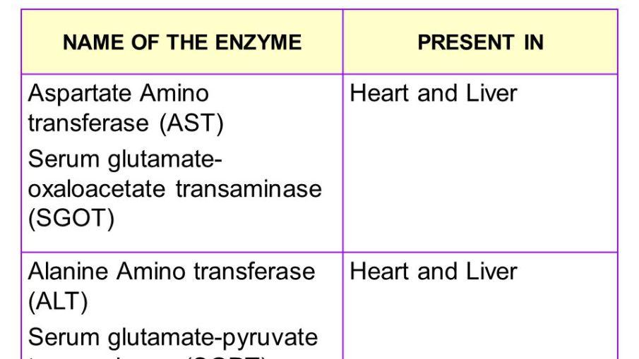 Principal Diagnostic Serum Enzymes